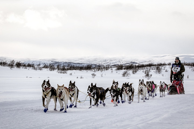 sled dog races vidda runners